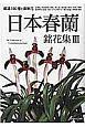 日本春蘭 銘花集 厳選!50種と最新花 (3)