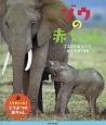 ゾウの赤ちゃん しりたいな!どうぶつの赤ちゃん