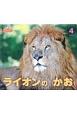 ライオンのかお