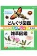 調べてみよう名前のひみつ植物編 全2巻 どんぐり図鑑/雑草図鑑