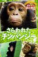 さらわれたチンパンジー 野生どうぶつを救え!本当にあった涙の物語