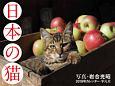 岩合光昭カレンダー 日本の猫 2018