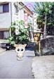 メチャイロちいき猫やってます!