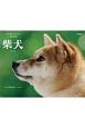 柴犬カレンダー 2018