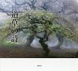 道草の詩 金澤啓写文集2