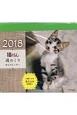 猫ぐらし 週めくり卓上カレンダー 2018