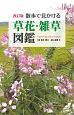 散歩で見かける草花・雑草図鑑<改訂版>