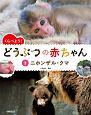 くらべよう! どうぶつの赤ちゃん ニホンザル・クマ (3)
