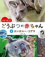 くらべよう! どうぶつの赤ちゃん カンガルー・コアラ (6)