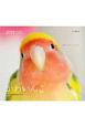 かわいんこ インコと小鳥のカレンダー 2019