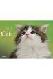 Cats カレンダー 2019