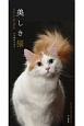 美しき猫 Cats in the Black カレンダー