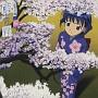 「藍より青し」藍青音盤一 桜(通常盤)