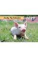 Lucky Pig Calendar 2019