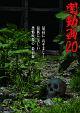 闇動画 20